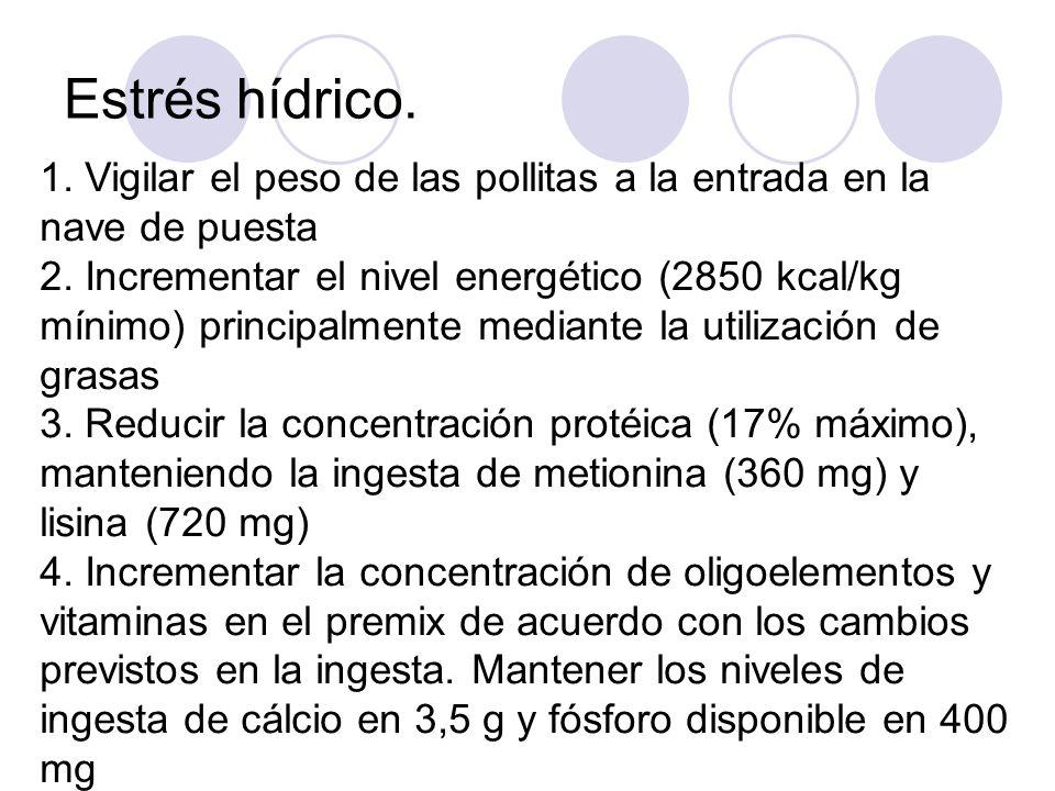 Estrés hídrico. 1. Vigilar el peso de las pollitas a la entrada en la nave de puesta 2. Incrementar el nivel energético (2850 kcal/kg mínimo) principa