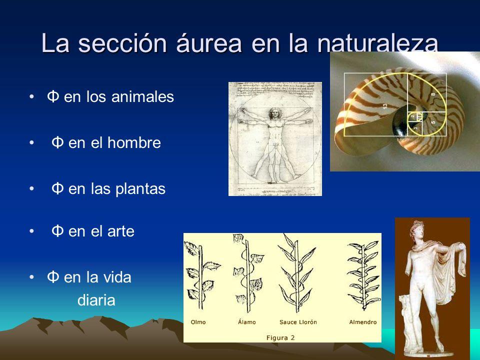 La sección áurea en la naturaleza Φ en los animales Φ en el hombre Φ en las plantas Φ en el arte Φ en la vida diaria