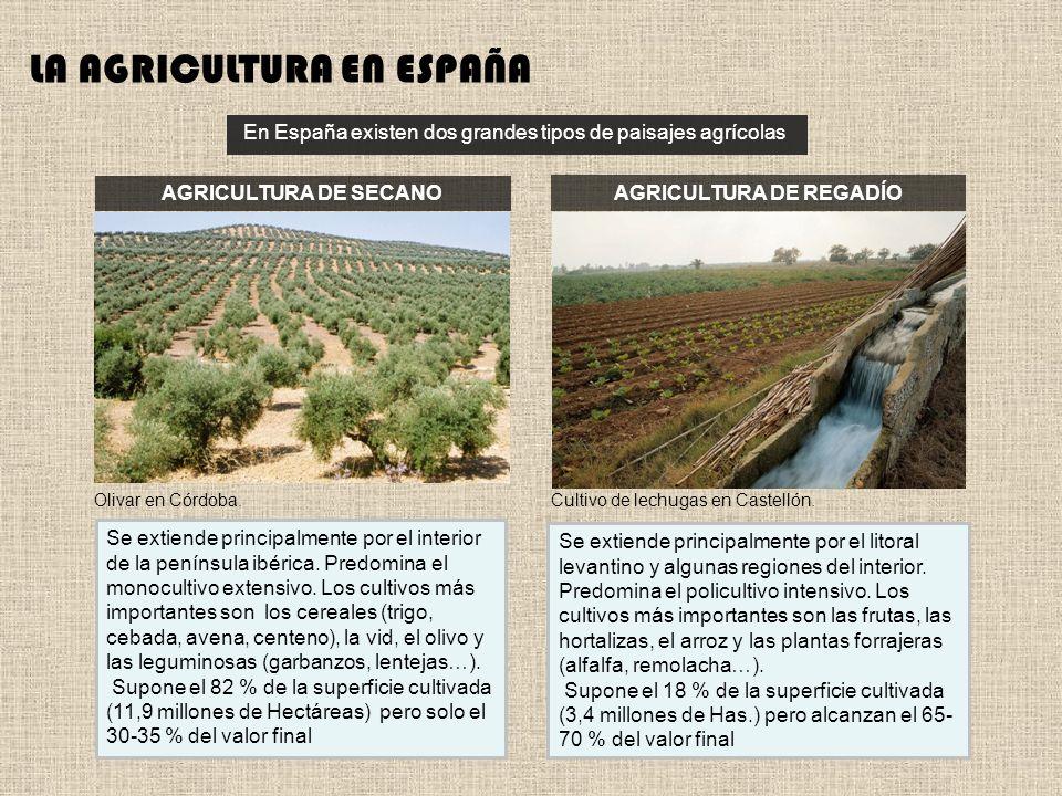 Los paisajes agrarios: un país de secanos y regadíos.