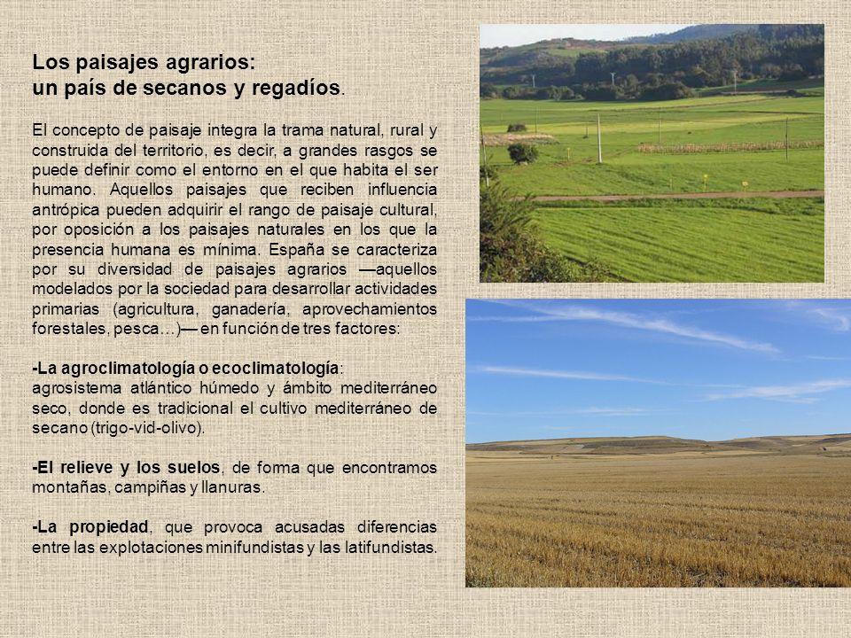 La distribución de cultivos en las 19,1 millones de Hectáreas de secano es la siguiente: 11,9 millones de Hectáreas (un 62%) corresponden a cultivos herbáceos de secano, es decir, cereales (6 millones Has.) en Castilla León, Castilla La Mancha, Aragón y Extremadura, así como oleaginosas (1 mill.