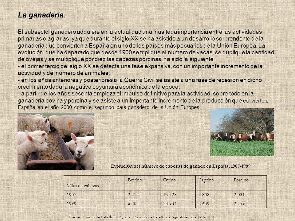 Evolución sectorial de la población ocupada en España (% sobre el total) 19001930196019701999 Sector primario 65,945,639,729,17,1 Sector secundario 1626,53337,330,8 Sector terciario 8,127,927,333,662,1