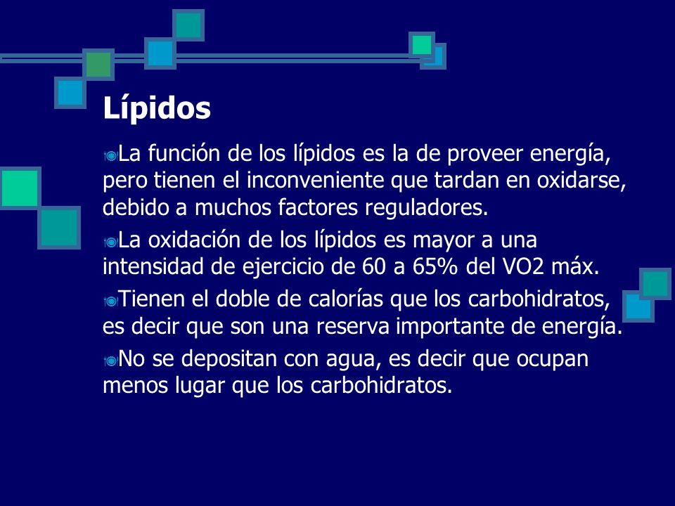 Lípidos La función de los lípidos es la de proveer energía, pero tienen el inconveniente que tardan en oxidarse, debido a muchos factores reguladores.