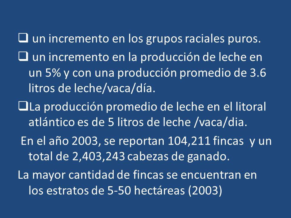 un incremento en los grupos raciales puros. un incremento en la producción de leche en un 5% y con una producción promedio de 3.6 litros de leche/vaca