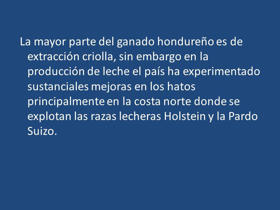 La mayor parte del ganado hondureño es de extracción criolla, sin embargo en la producción de leche el país ha experimentado sustanciales mejoras en l