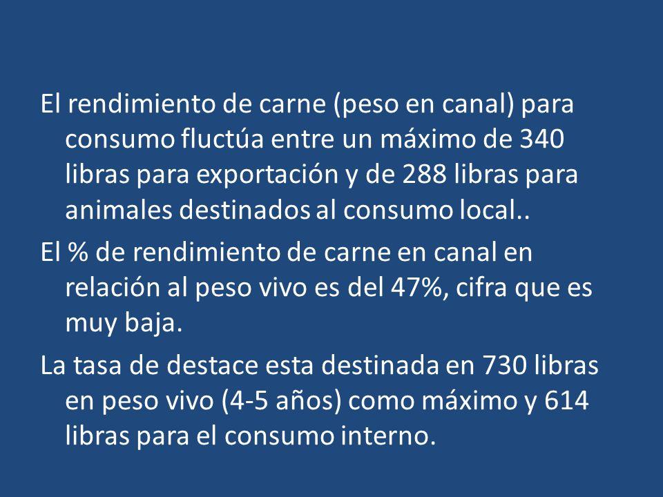 El rendimiento de carne (peso en canal) para consumo fluctúa entre un máximo de 340 libras para exportación y de 288 libras para animales destinados a