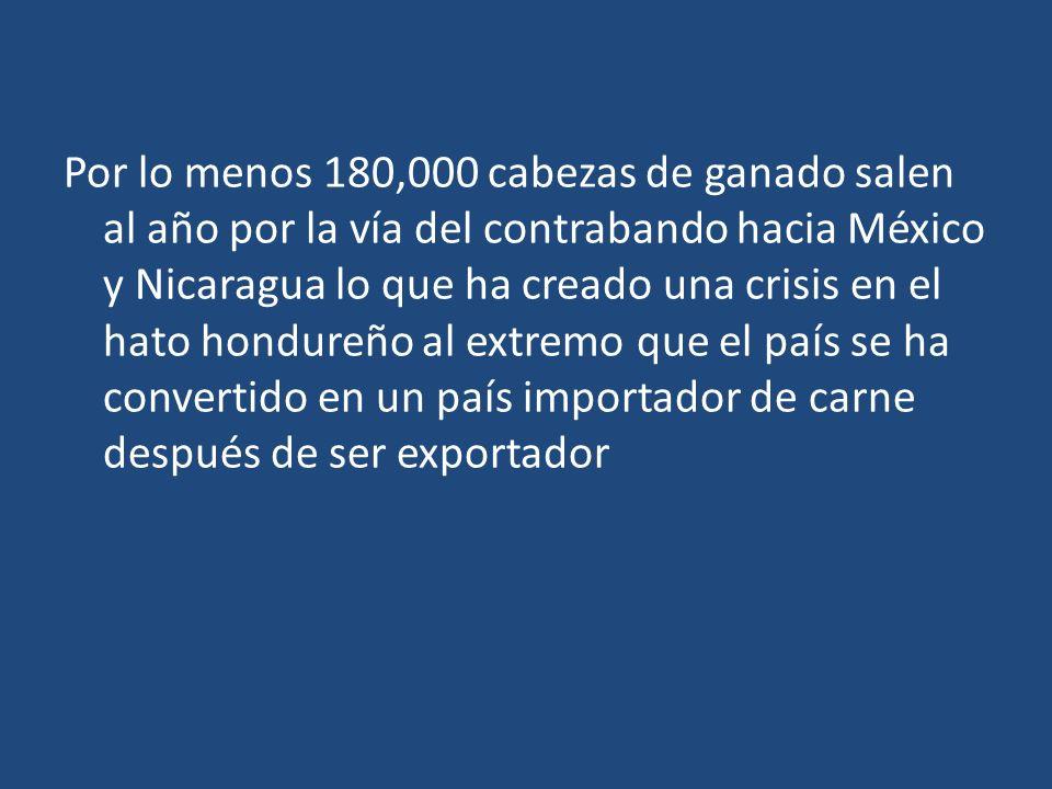 Por lo menos 180,000 cabezas de ganado salen al año por la vía del contrabando hacia México y Nicaragua lo que ha creado una crisis en el hato hondure