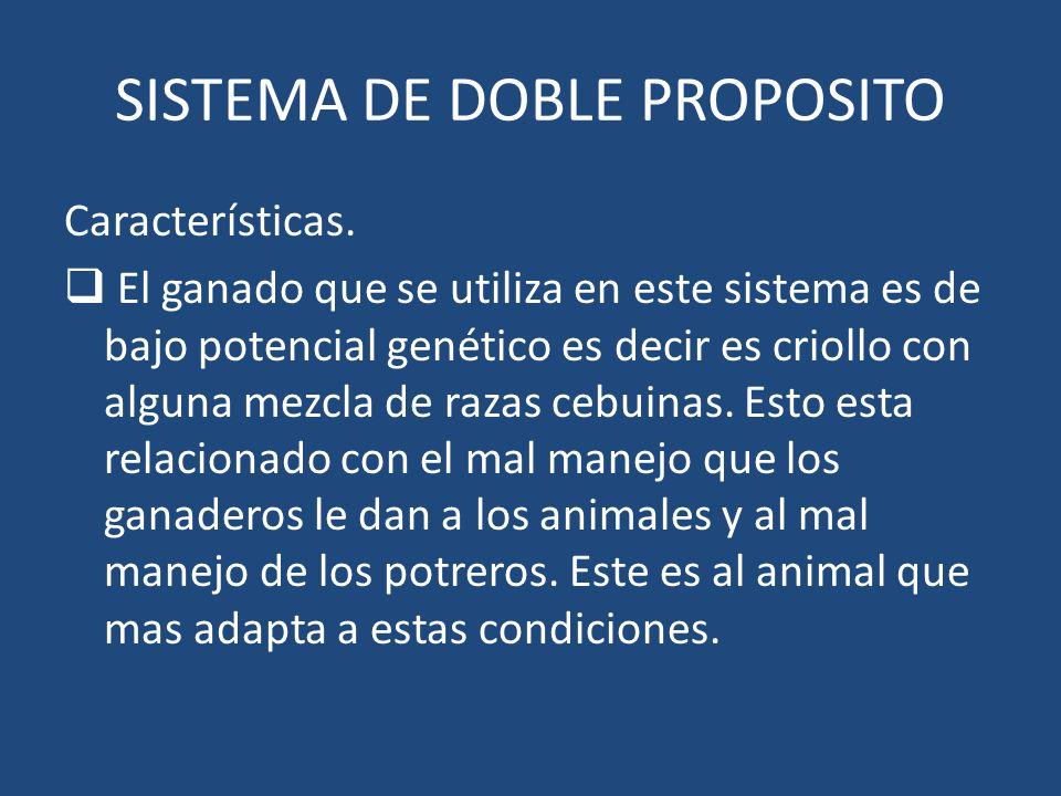 SISTEMA DE DOBLE PROPOSITO Características. El ganado que se utiliza en este sistema es de bajo potencial genético es decir es criollo con alguna mezc
