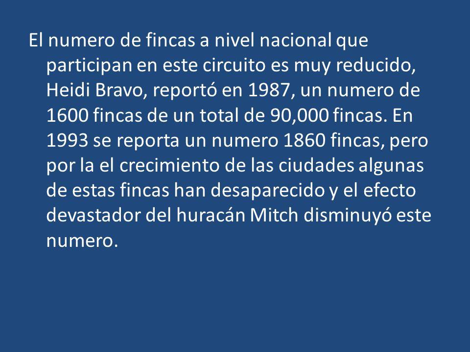 El numero de fincas a nivel nacional que participan en este circuito es muy reducido, Heidi Bravo, reportó en 1987, un numero de 1600 fincas de un tot