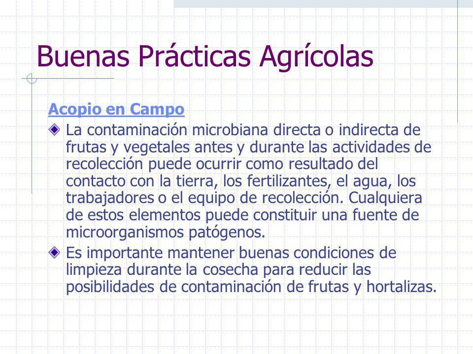 Buenas Prácticas Agrícolas Trabajadores Las personas que manipulan las frutas y hortalizas frescas en las diferentes etapas de la producción primaria