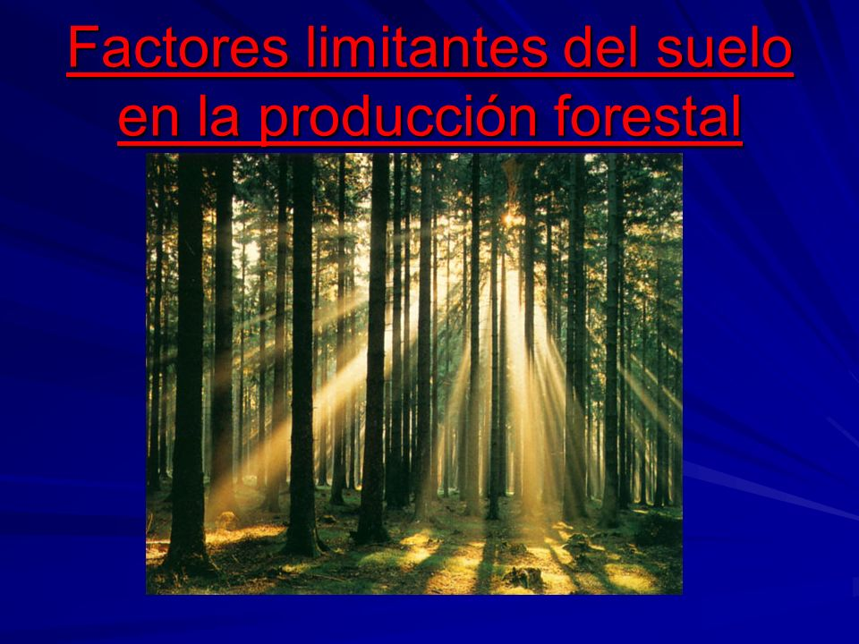 Factores limitantes del suelo en la producción forestal