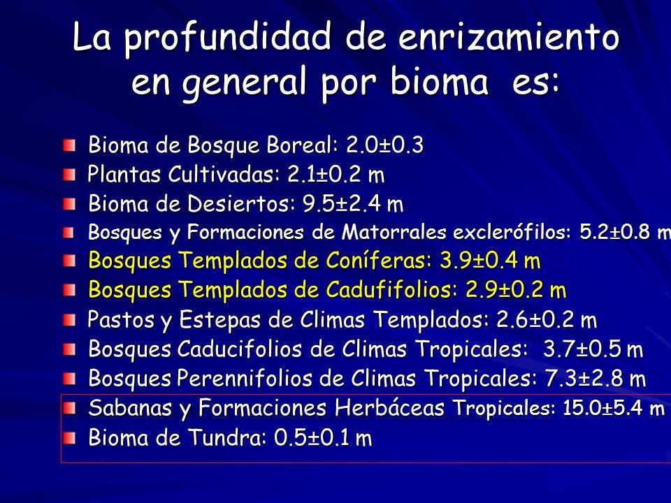 La profundidad de enrizamiento en general por bioma es: Bioma de Bosque Boreal: 2.0±0.3 Plantas Cultivadas: 2.1±0.2 m Bioma de Desiertos: 9.5±2.4 m Bo
