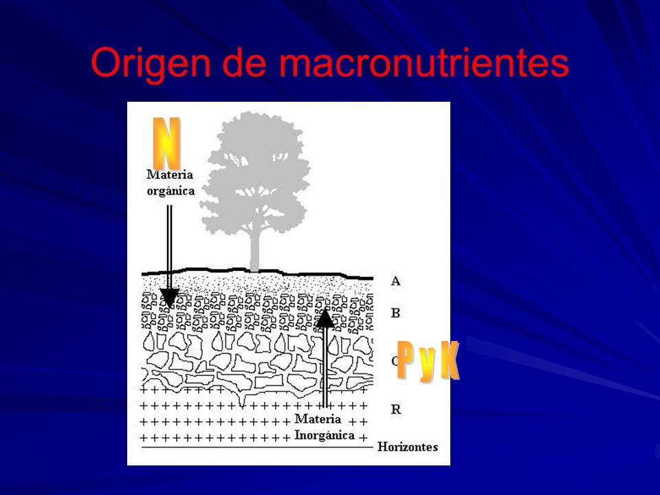 Origen de macronutrientes N