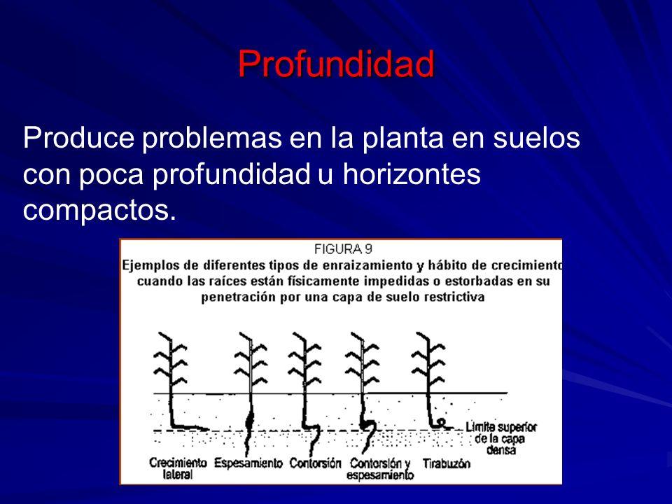 Profundidad Produce problemas en la planta en suelos con poca profundidad u horizontes compactos.