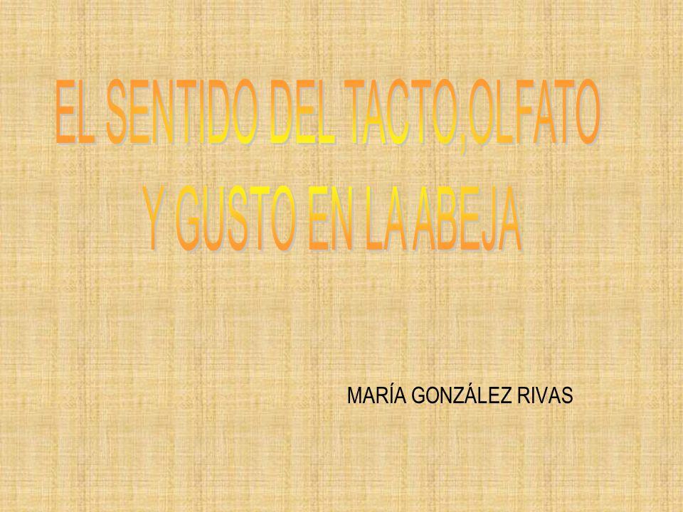 MARÍA GONZÁLEZ RIVAS
