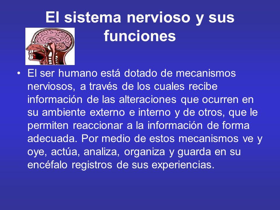 El sistema nervioso y sus funciones El ser humano está dotado de mecanismos nerviosos, a través de los cuales recibe información de las alteraciones q