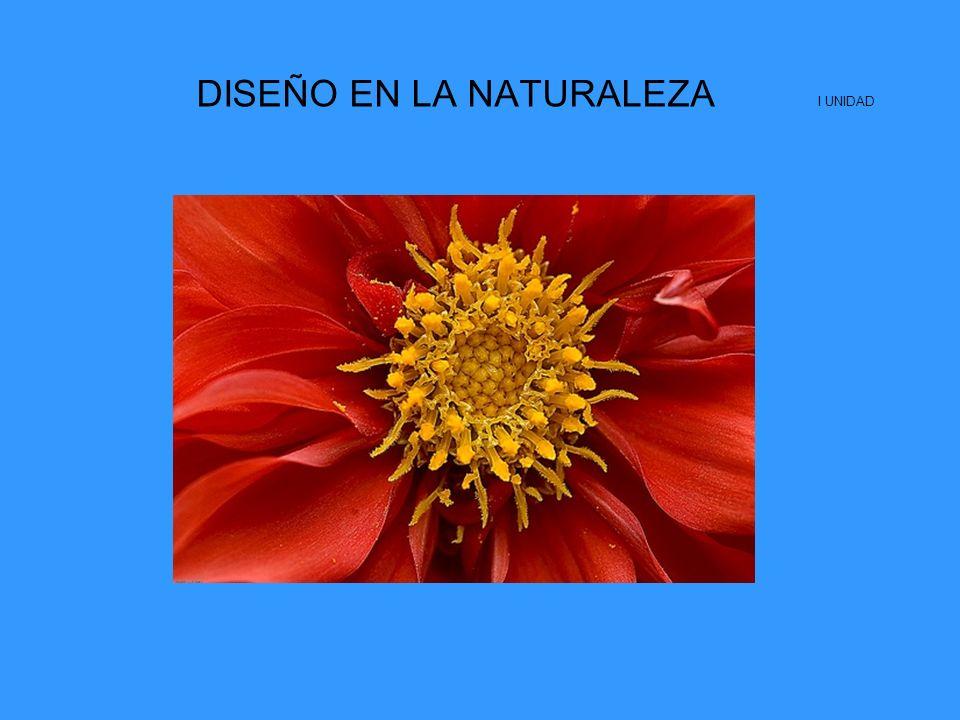 DISEÑO EN LA NATURALEZA I UNIDAD.