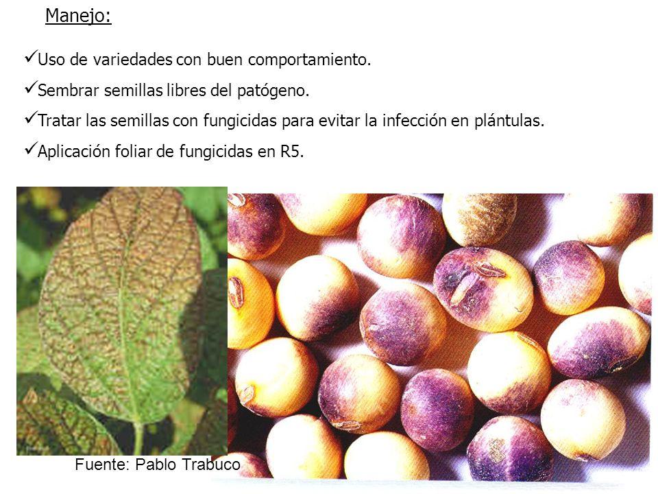 Uso de variedades con buen comportamiento. Sembrar semillas libres del patógeno. Tratar las semillas con fungicidas para evitar la infección en plántu