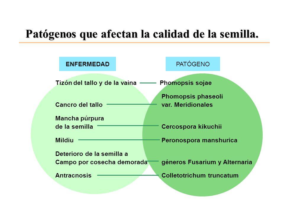 Patógenos que afectan la calidad de la semilla. ENFERMEDADPATÓGENO Tizón del tallo y de la vaina Phomopsis sojae Phomopsis phaseoli Cancro del tallova