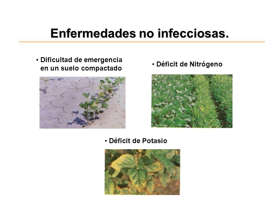 Enfermedades no infecciosas. Dificultad de emergencia en un suelo compactado Déficit de Nitrógeno Déficit de Potasio