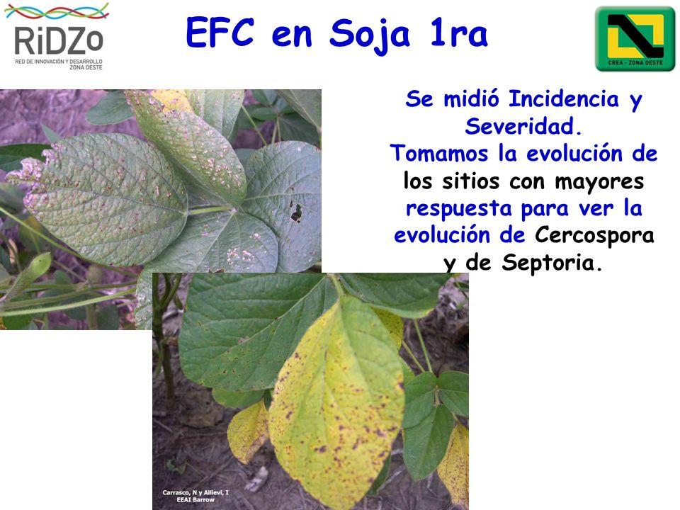 Se midió Incidencia y Severidad. Tomamos la evolución de los sitios con mayores respuesta para ver la evolución de Cercospora y de Septoria. EFC en So