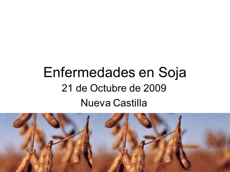 Mancha anillada (Corynspora cassiicola) Síntomas y signos: Afección principalmente de hongos con lesiones redondas a irregulares de color marrón rojizo de tamaño variable.