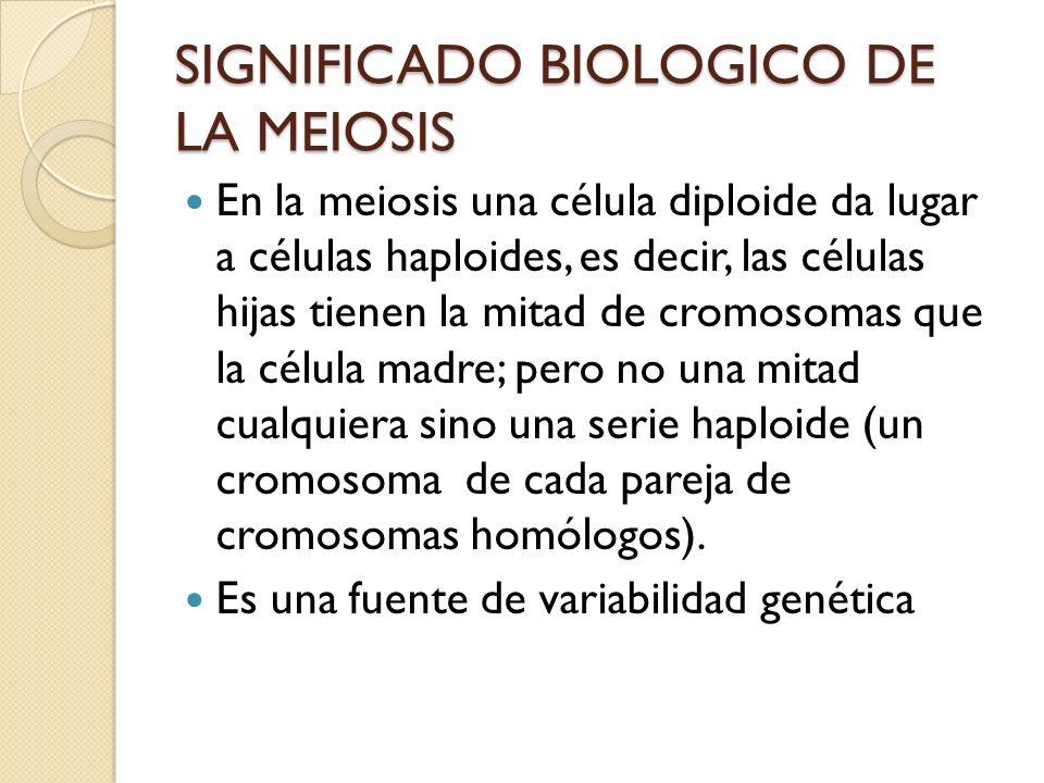 SIGNIFICADO BIOLOGICO DE LA MEIOSIS En la meiosis una célula diploide da lugar a células haploides, es decir, las células hijas tienen la mitad de cro