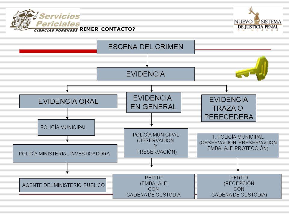 EVIDENCIA QUIEN TIENE EL PRIMER CONTACTO? ESCENA DEL CRIMEN EVIDENCIA EVIDENCIA ORAL EVIDENCIA EN GENERAL EVIDENCIA TRAZA O PERECEDERA POLICÍA MUNICIP