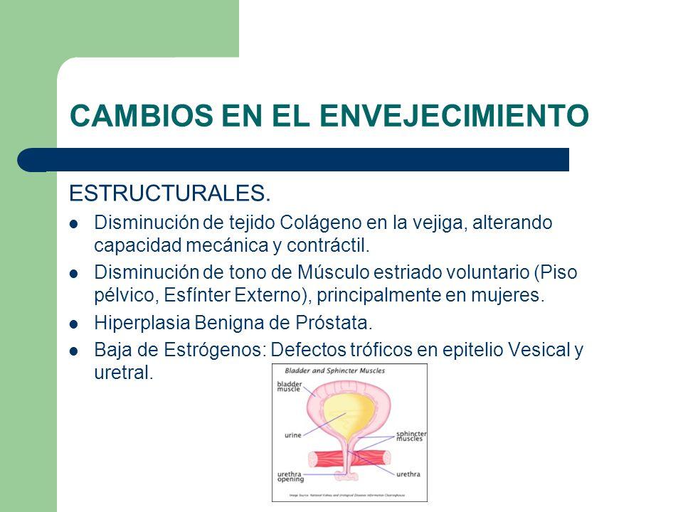 CAMBIOS EN EL ENVEJECIMIENTO ESTRUCTURALES. Disminución de tejido Colágeno en la vejiga, alterando capacidad mecánica y contráctil. Disminución de ton