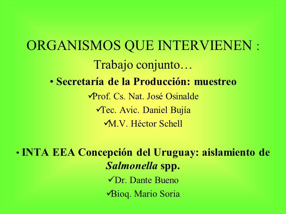 ORGANISMOS QUE INTERVIENEN : Trabajo conjunto… Secretaría de la Producción: muestreo Prof. Cs. Nat. José Osinalde Tec. Avic. Daniel Bujía M.V. Héctor