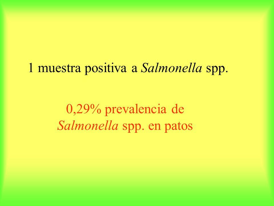 1 muestra positiva a Salmonella spp. 0,29% prevalencia de Salmonella spp. en patos