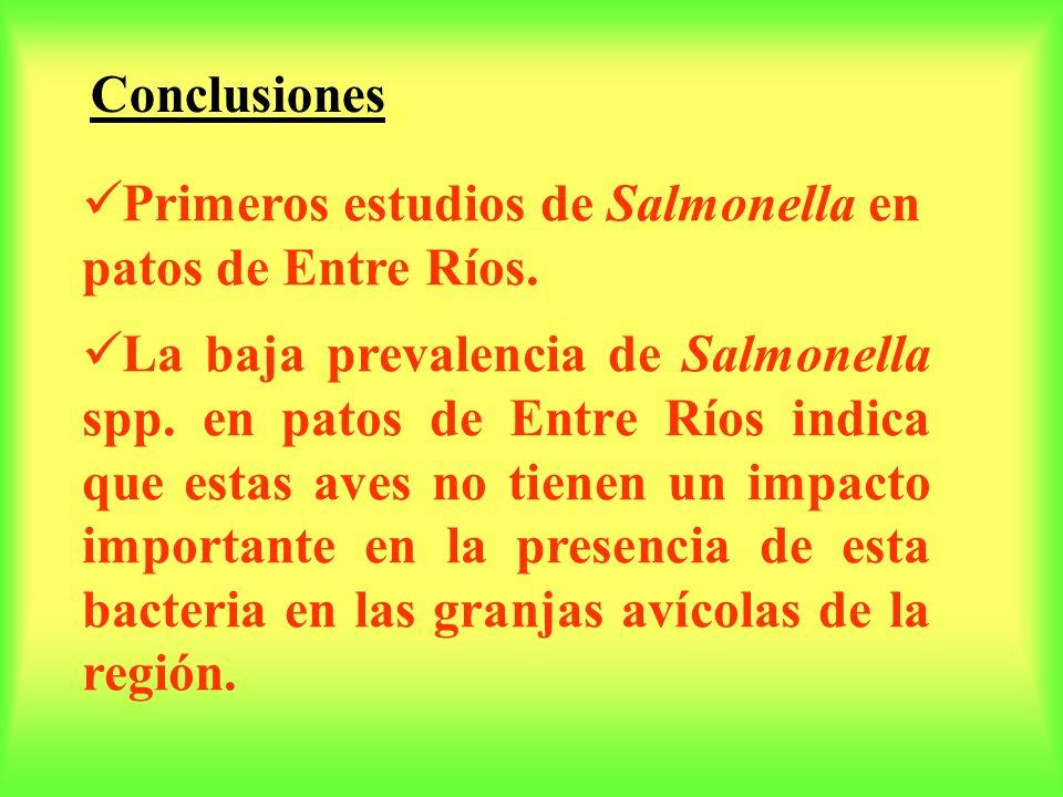 Primeros estudios de Salmonella en patos de Entre Ríos. La baja prevalencia de Salmonella spp. en patos de Entre Ríos indica que estas aves no tienen