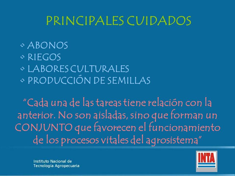 PRINCIPALES CUIDADOS ABONOS RIEGOS LABORES CULTURALES PRODUCCIÓN DE SEMILLAS Cada una de las tareas tiene relación con la anterior. No son aisladas, s