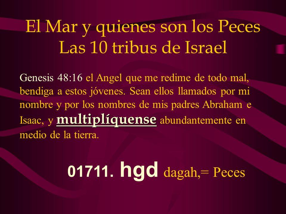 El Mar y quienes son los Peces Las 10 tribus de Israel multiplíquense Genesis 48:16 el Angel que me redime de todo mal, bendiga a estos jóvenes. Sean