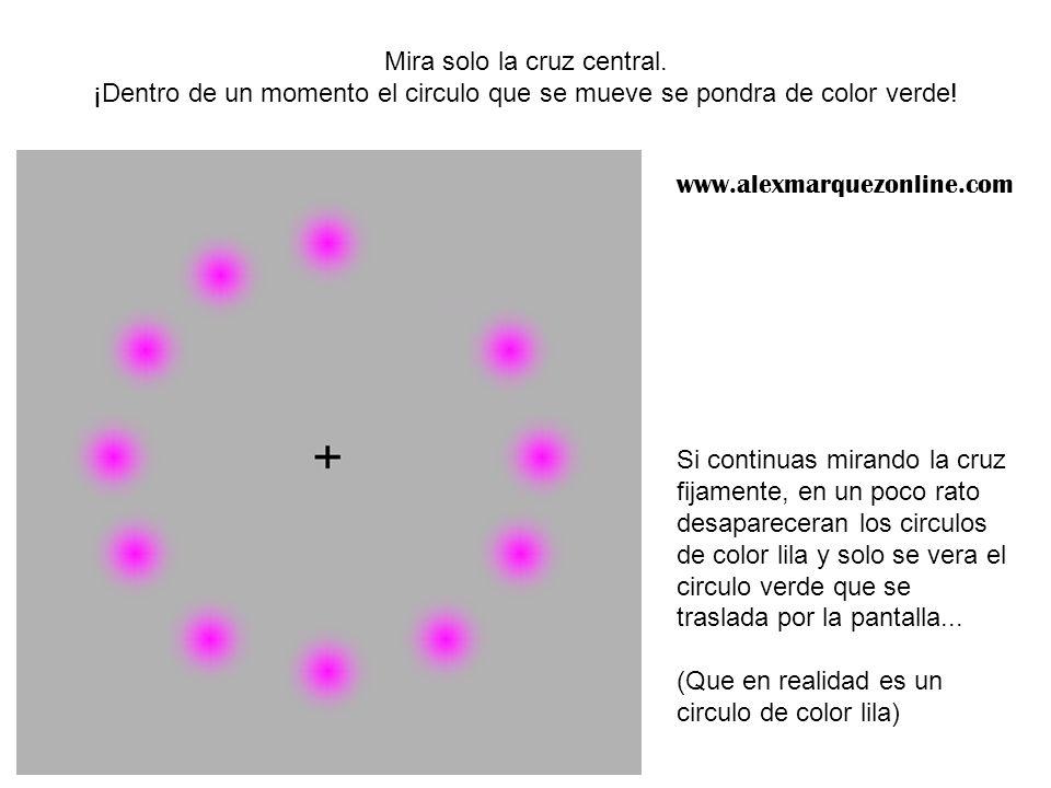 Mira solo la cruz central. ¡Dentro de un momento el circulo que se mueve se pondra de color verde! Si continuas mirando la cruz fijamente, en un poco