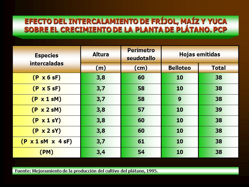 EFECTO DEL INTERCALAMIENTO DE FRÍJOL, MAÍZ Y YUCA SOBRE EL CRECIMIENTO DE LA PLANTA DE PLÁTANO. PCP EspeciesintercaladasAlturaPerímetroseudotallo Hoja