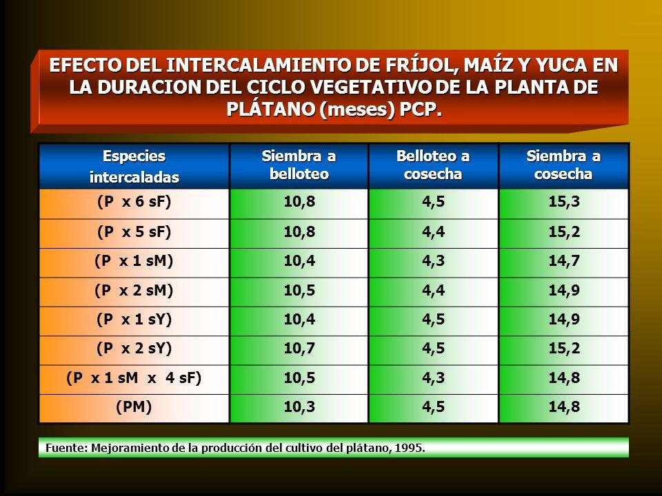 EFECTO DEL INTERCALAMIENTO DE FRÍJOL, MAÍZ Y YUCA EN LA DURACION DEL CICLO VEGETATIVO DE LA PLANTA DE PLÁTANO (meses) PCP. Especiesintercaladas Siembr
