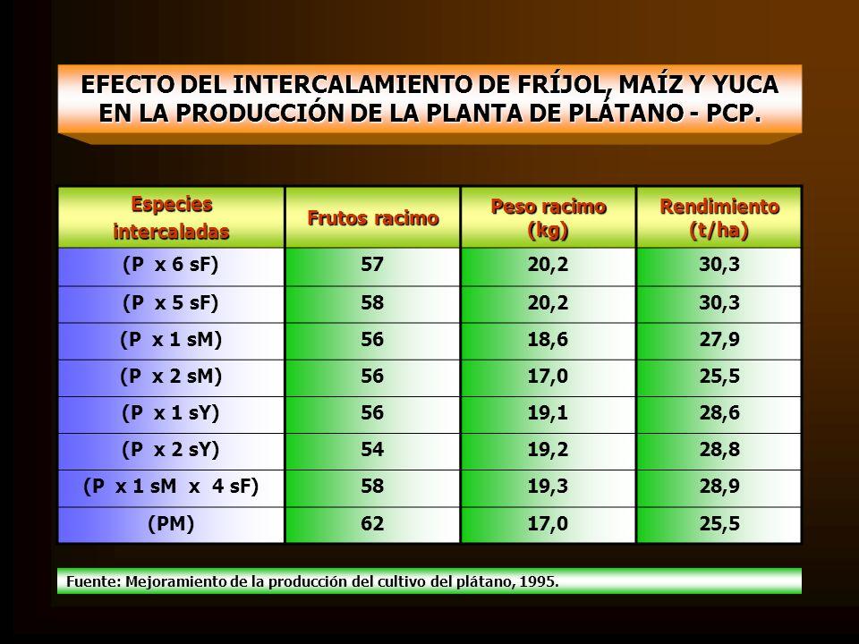 EFECTO DEL INTERCALAMIENTO DE FRÍJOL, MAÍZ Y YUCA EN LA PRODUCCIÓN DE LA PLANTA DE PLÁTANO - PCP. Especiesintercaladas Frutos racimo Peso racimo (kg)