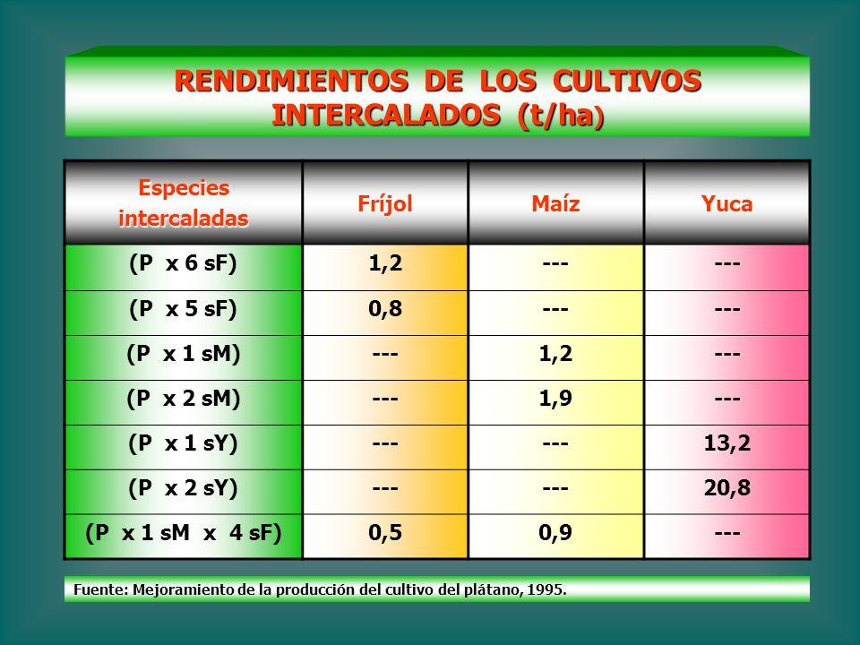 RENDIMIENTOS DE LOS CULTIVOS INTERCALADOS (t/ha ) EspeciesintercaladasFríjolMaízYuca (P x 6 sF)1,2--- (P x 5 sF)0,8--- (P x 1 sM)---1,2--- (P x 2 sM)-