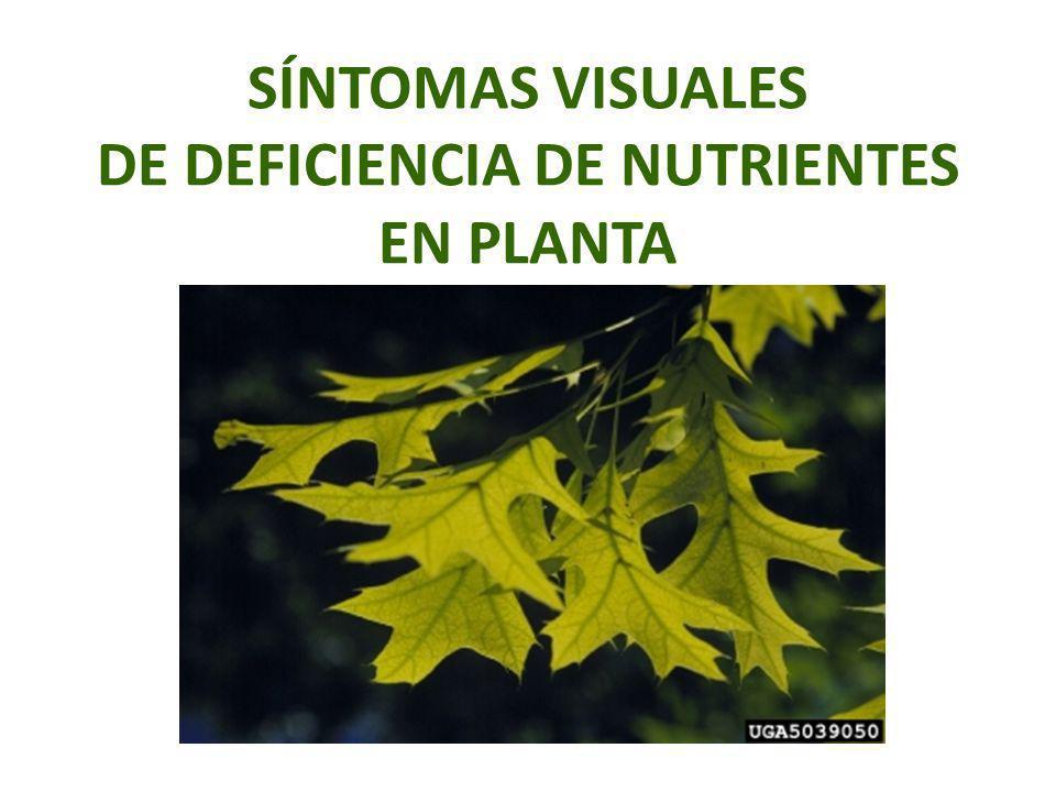 SÍNTOMAS VISUALES DE DEFICIENCIA DE NUTRIENTES EN PLANTA