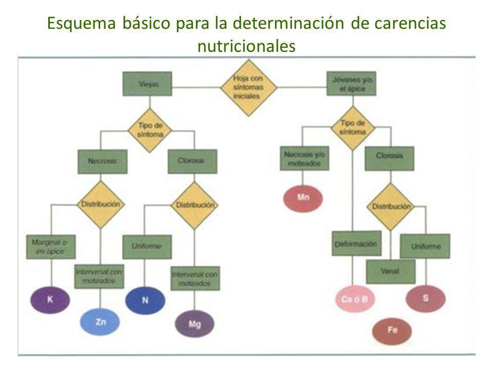 Esquema básico para la determinación de carencias nutricionales