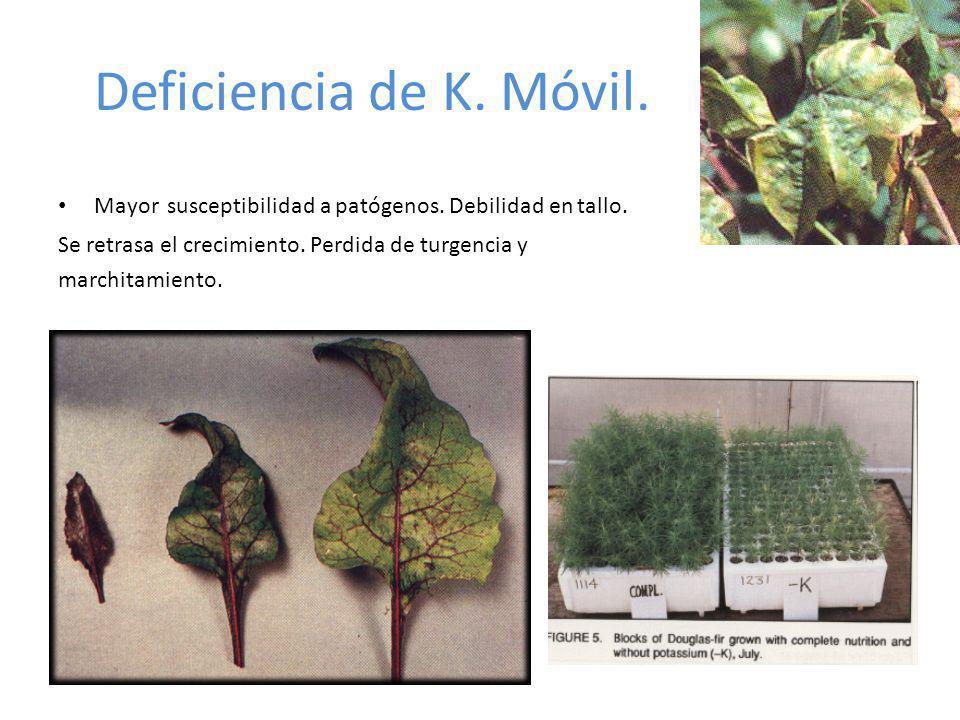 Deficiencia de K. Móvil. Mayor susceptibilidad a patógenos. Debilidad en tallo. Se retrasa el crecimiento. Perdida de turgencia y marchitamiento.