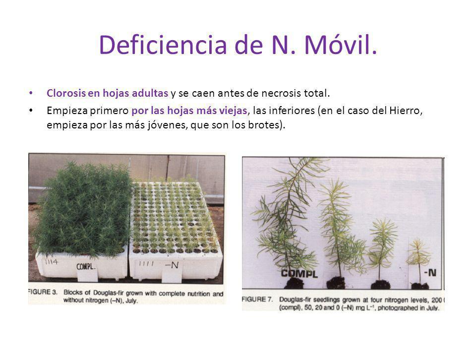 Deficiencia de N. Móvil. Clorosis en hojas adultas y se caen antes de necrosis total. Empieza primero por las hojas más viejas, las inferiores (en el