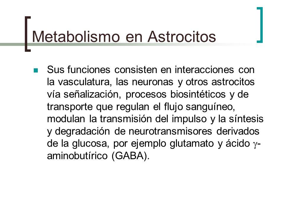 Metabolismo en Astrocitos Sus funciones consisten en interacciones con la vasculatura, las neuronas y otros astrocitos vía señalización, procesos bios