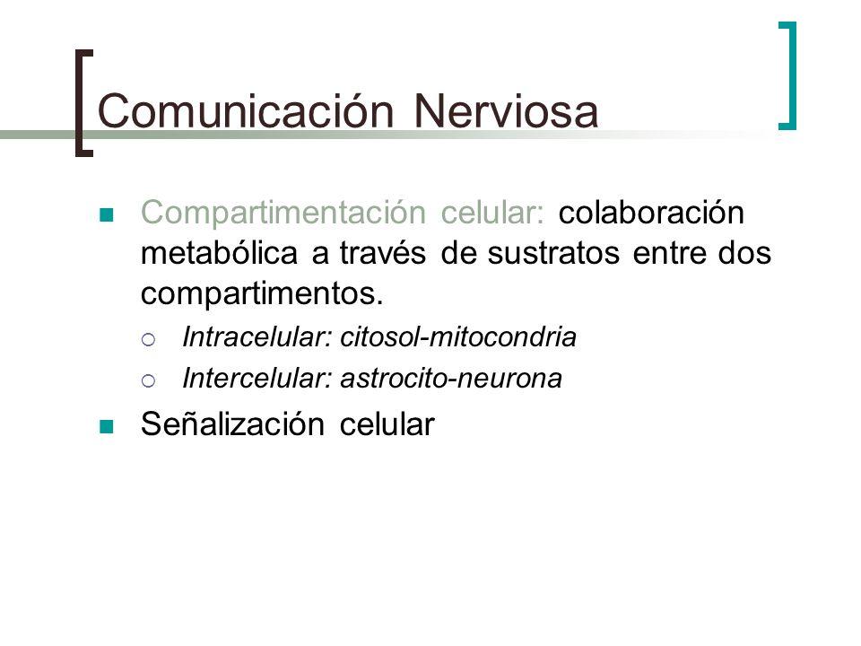 Comunicación Nerviosa Compartimentación celular: colaboración metabólica a través de sustratos entre dos compartimentos. Intracelular: citosol-mitocon