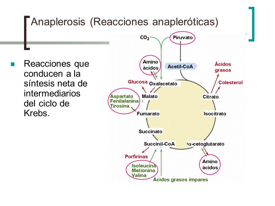 Anaplerosis (Reacciones anapleróticas) Reacciones que conducen a la síntesis neta de intermediarios del ciclo de Krebs.