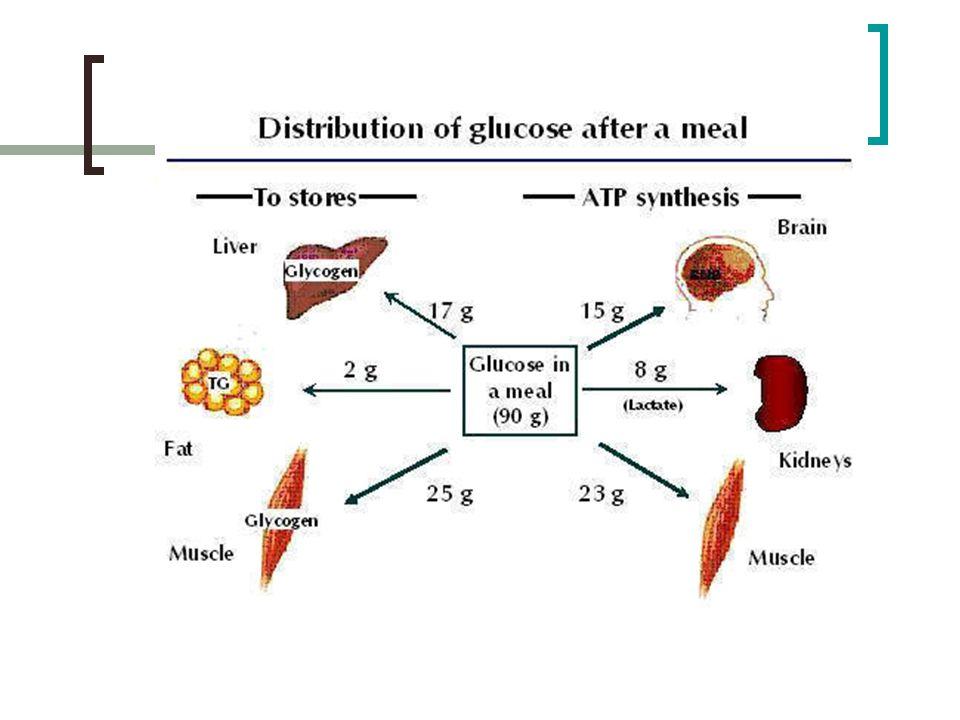 Consumo de oxígeno en hombre de 70 kg mL O 2 /min Estado basal 250 Cerebro 49 * Significa que una masa de 1,4 kg (2% del peso corporal) consume el 20% del oxígeno.