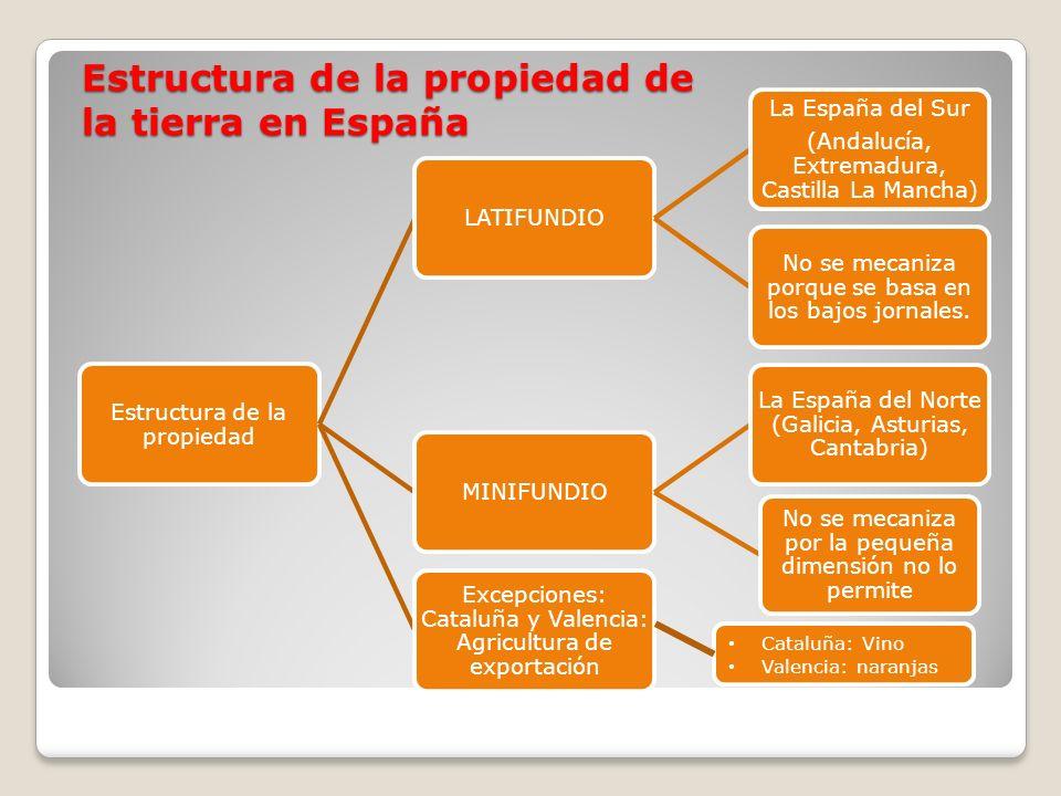 Estructura de la propiedad LATIFUNDIO La España del Sur (Andalucía, Extremadura, Castilla La Mancha) No se mecaniza porque se basa en los bajos jornal