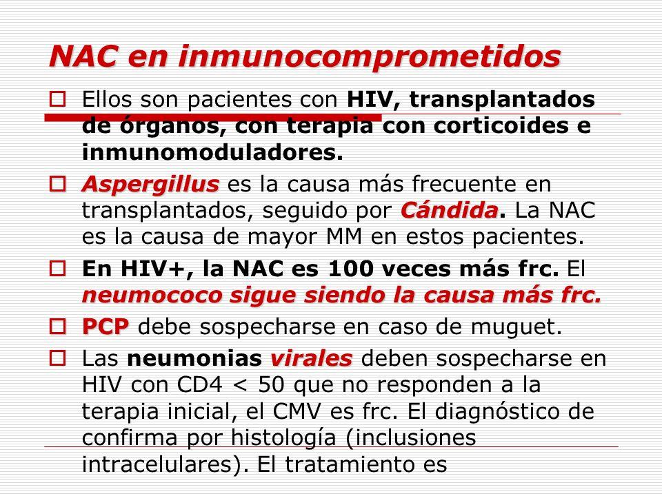 NAC en inmunocomprometidos Ellos son pacientes con HIV, transplantados de órganos, con terapia con corticoides e inmunomoduladores. Aspergillus Cándid