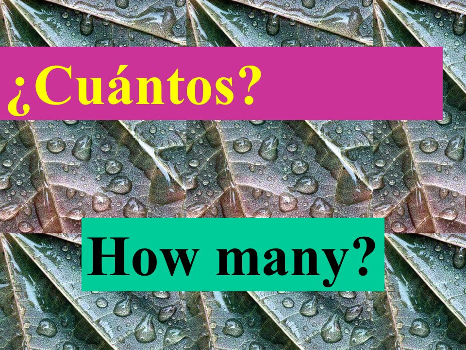 ¿Cuál? Which OR WHAT?