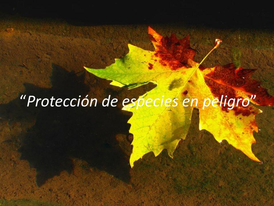 Protección de especies en peligro